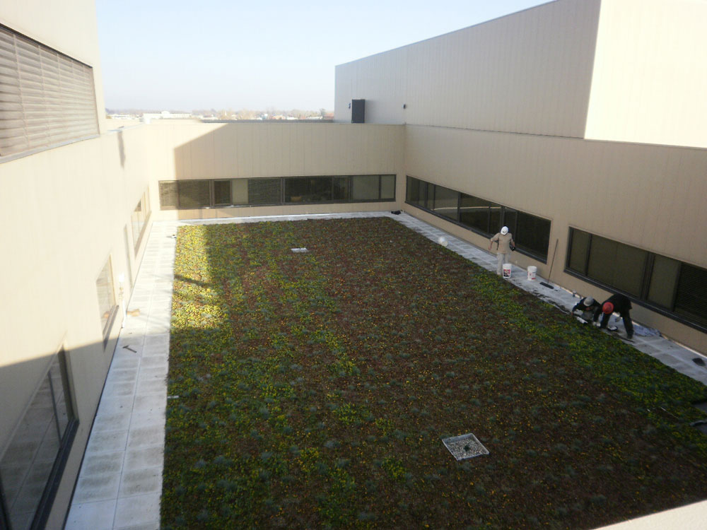 Green Roofing Installation